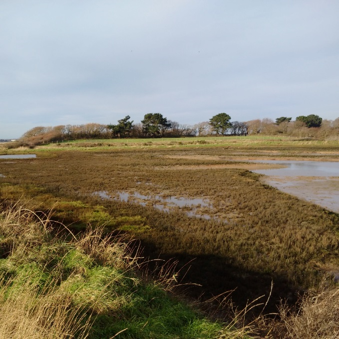 Photo showing Intertidal habitat creation scheme at Cobnor